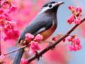 Cảm nhận về khổ thơ Ta làm con chim hót....Một nốt trầm xao xuyến Mùa xuân nho nhỏ