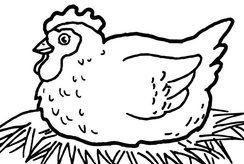 Tặng bé bộ tranh tô màu con gà dễ thương thỏa sức sáng tạo