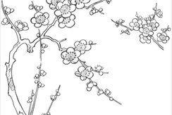 Bé làm quen với tranh tô màu cùng chủ đề cây hoa mai miền Nam