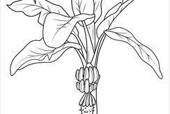 Bé tập nhận biết cây cối qua bộ 8+ tranh tô màu hình cây chuối