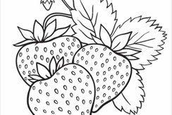 15 tranh tô màu quả dâu tây siêu dễ thương