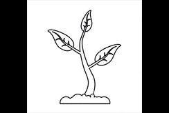 Bé tìm hiểu về sự phát triển của cây qua tranh tô màu sáng tạo