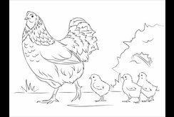 Tranh tô màu con gà mái, đàn gà con đi kiếm mồi rất dễ thương cho bé yêu