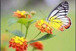 Để bé trổ tài khéo tay với tranh tô màu con bướm đẹp