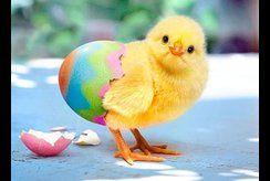 Mẹ in tranh tô màu con gà cho bé tập làm họa sĩ