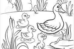 Top tranh tô màu con vịt đáng yêu cho bé thích tô vẽ động vật