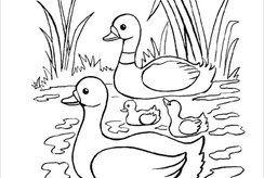 15 tranh tô màu hình con vịt dành cho bé yêu động vật