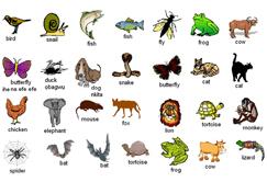 Các con vật khác