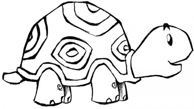 Chú rùa đáng yêu
