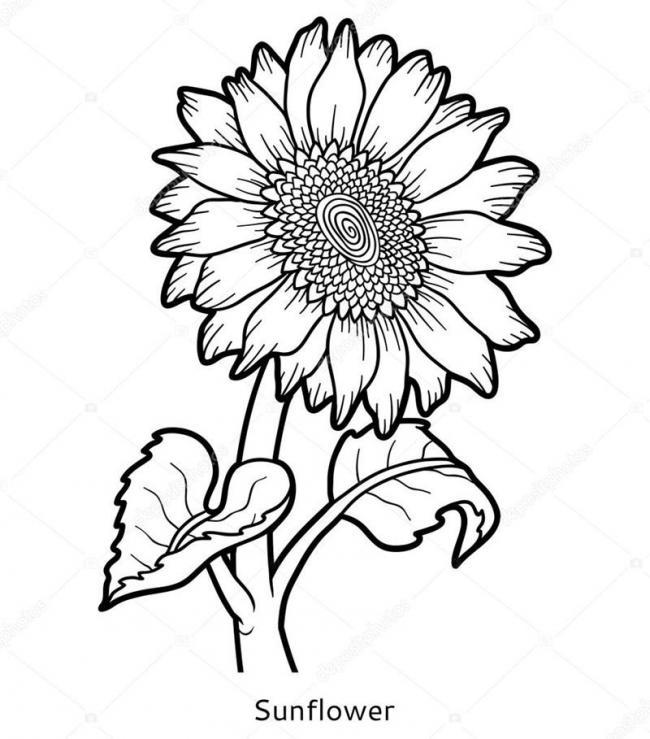 tranh to mau hoa huong duong lon