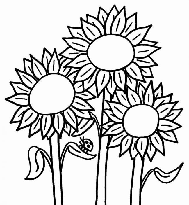 tranh to mau khom hoa huong duong cung canh cam