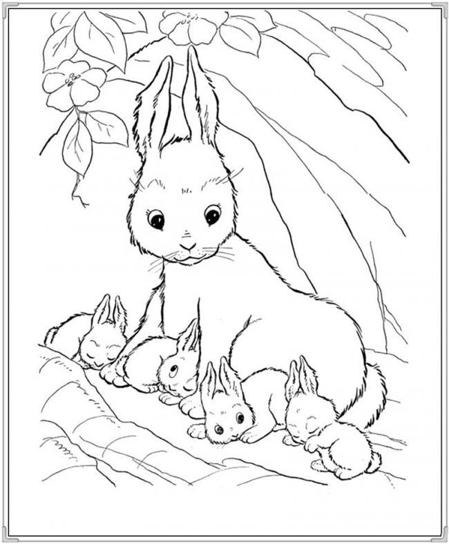 Đàn thỏ đáng yêu