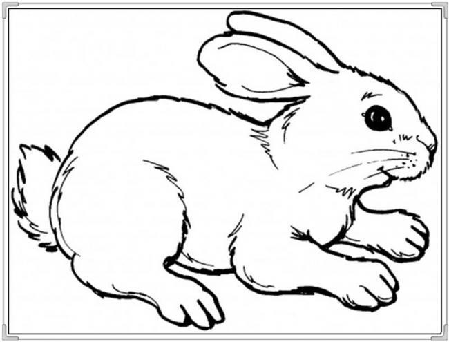 tranh tô màu con thỏ