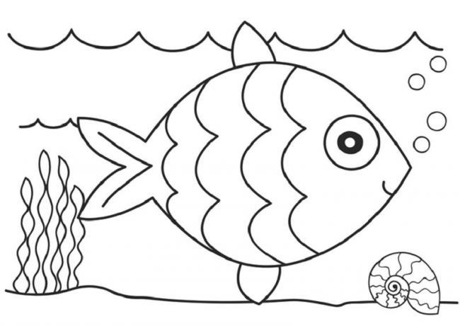 Cá và Ốc xinh
