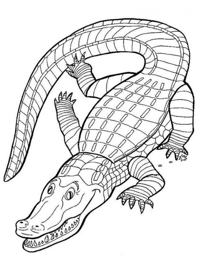 hình ảnh cá sấu hung dữ