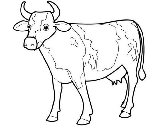 Con bò sữa