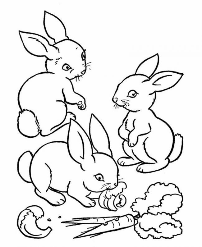 Thỏ con dễ thương