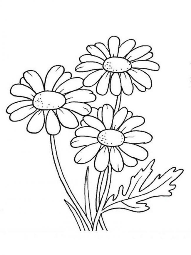 tranh to mau hoa cuc cho tre 4 tuoi