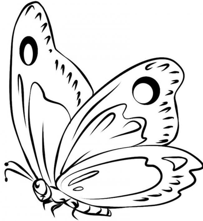 tranh tô màu chú bướm xinh đẹp cho bé gái