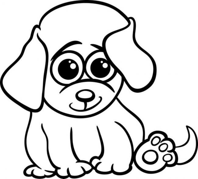 Chú chó với đôi tai lớn