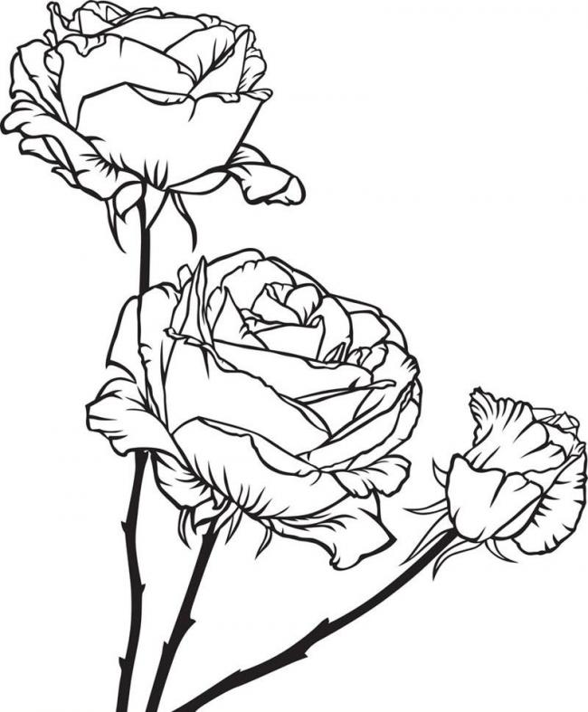 tranh to mau hoa hong kich thich sang tao