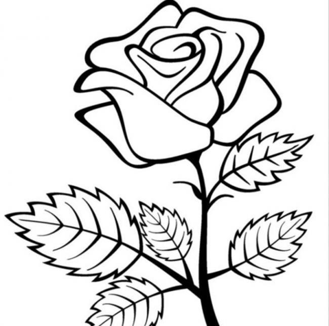 tranh to mau hoa hong co ban