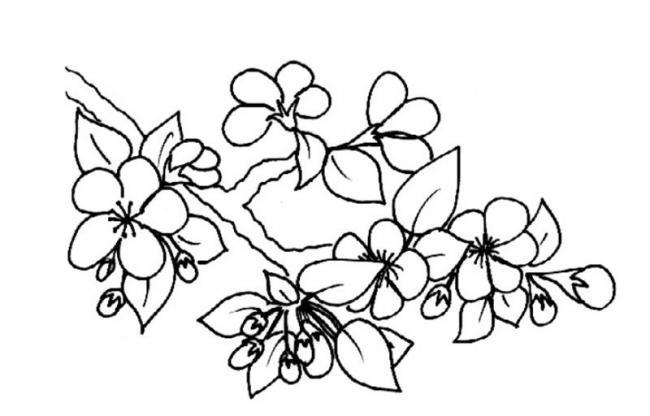 tranh to mau hoa mai don gian