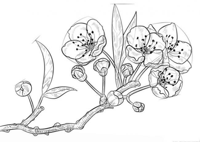 tranh to mau hoa mai ve chi cuon hut