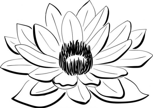 tranh to mau hoa sen don gian anh 3