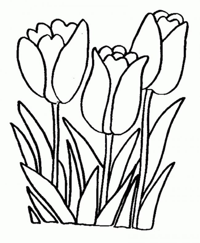 hình vẽ cây hoa tu líp hà lan