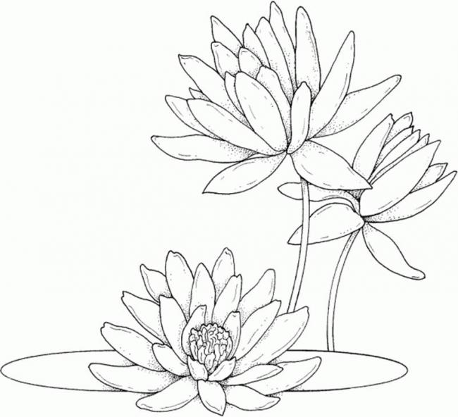 buc tranh cay hoa sung trong dam mua he
