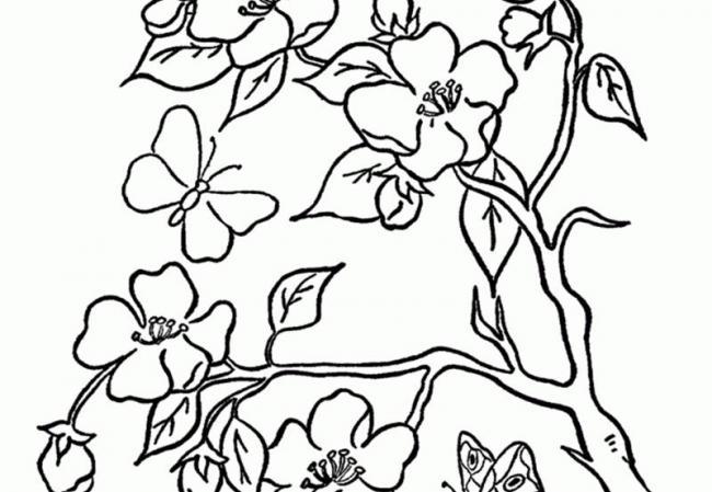 tranh tô màu hình cây hoa mai mùa xuân
