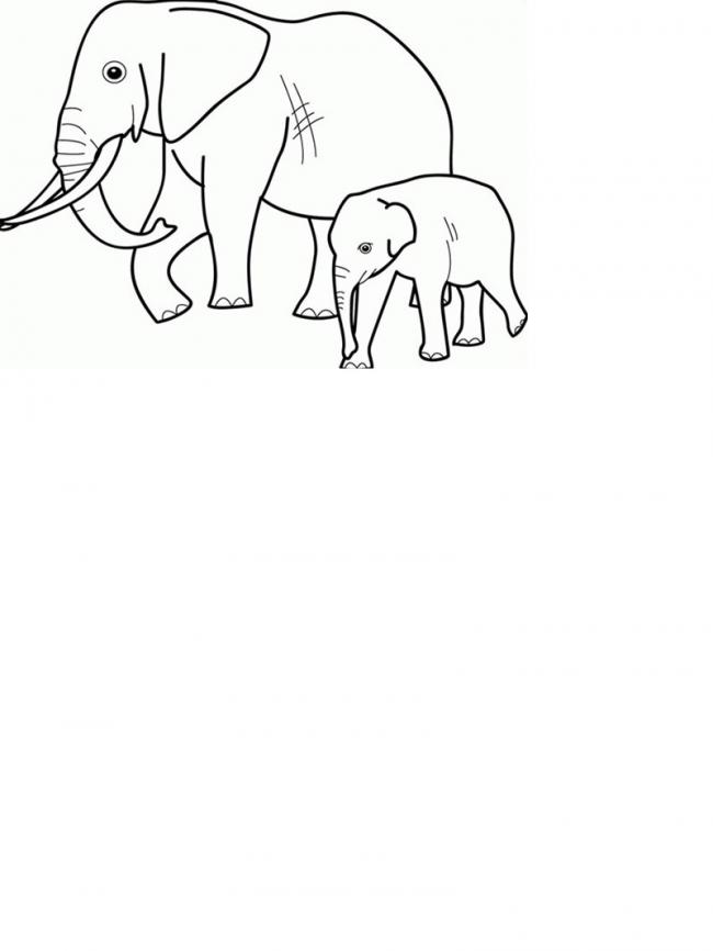 Hai mẹ con voi đi đâu vậy nhỉ?