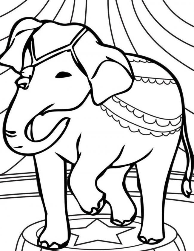 Chú voi với chiếc áo điệu đà.