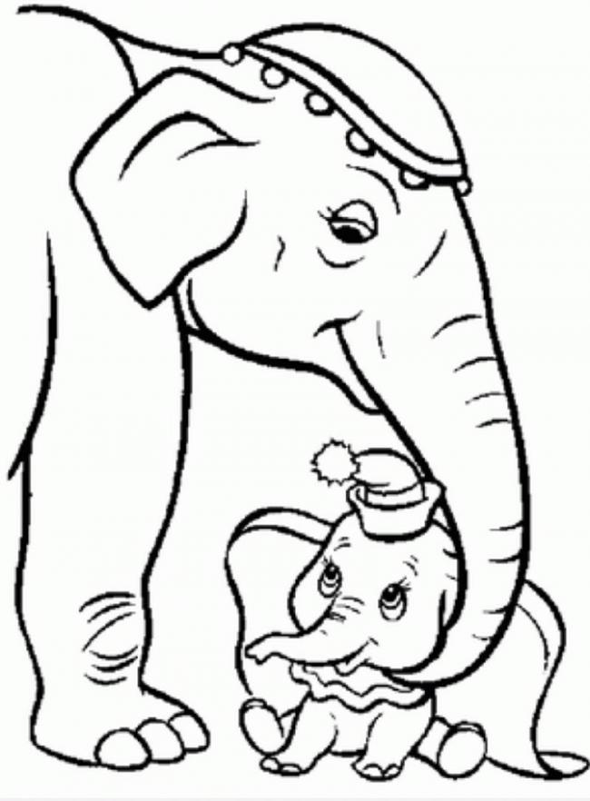 Voi mẹ và voi con đáng yêu