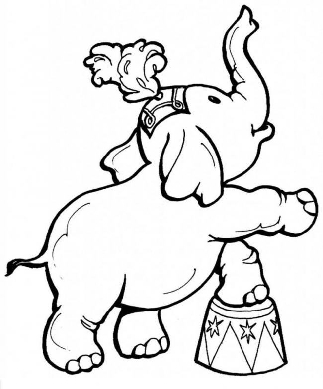 Nhìn chiếc mũ xinh xắn của chú voi kìa