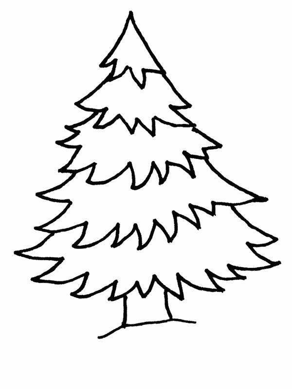 cây thông lùn với thân cây thật cao lớn
