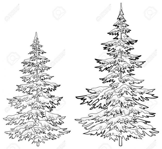 những cây thông xanh phủ đầy tuyết trắng