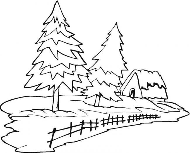 ngôi nhà nhỏ xinh nằm bên hàng thông xanh mượt