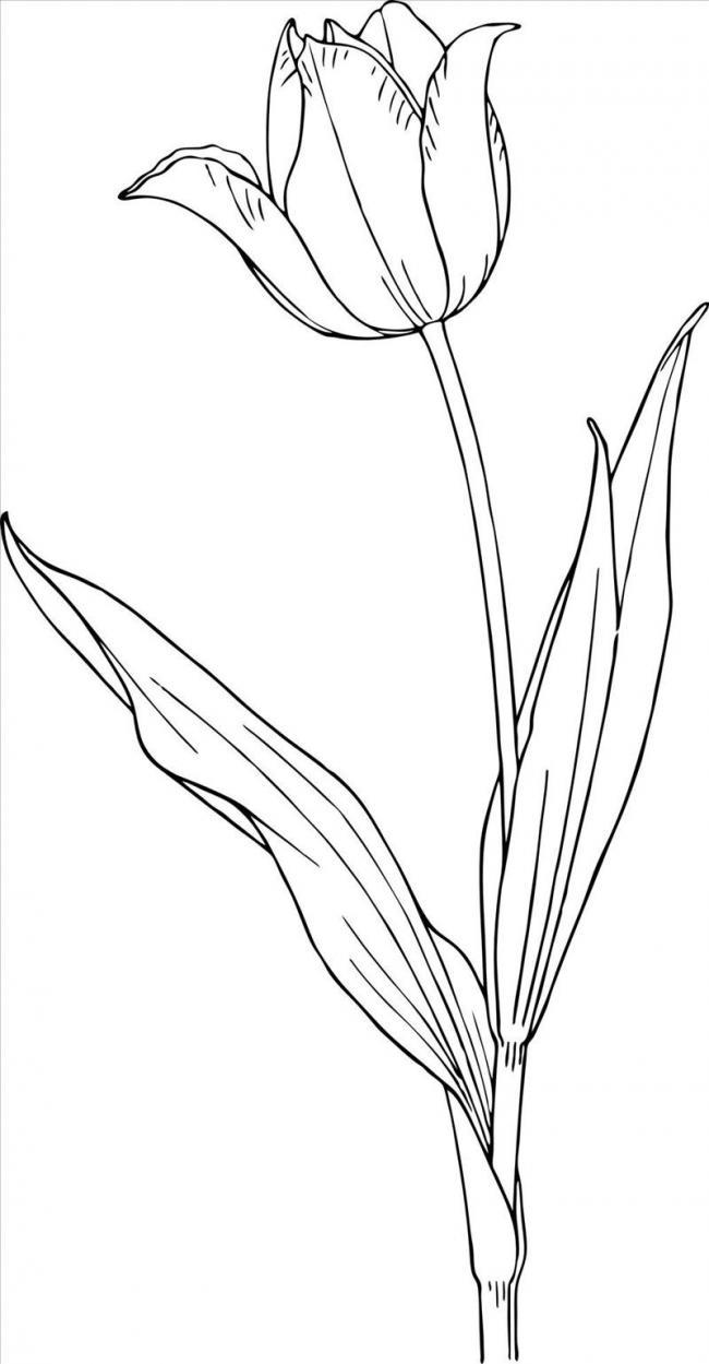 to mau hoa tulip net ve chan thuc