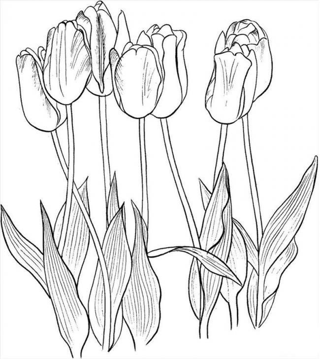 tranh to mau hoa tulip nghe thuat