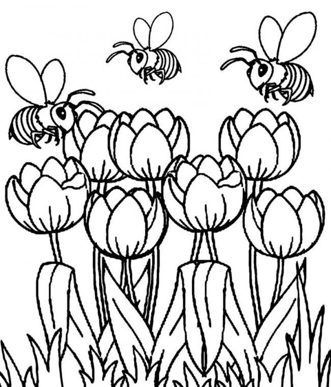 nhung chu ong von tren hoa tulip