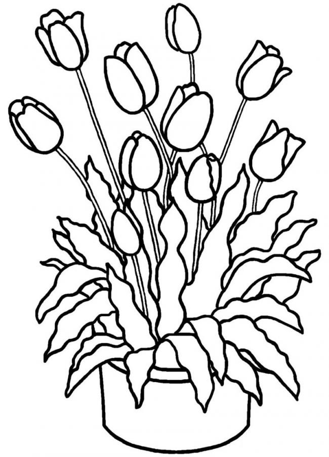 chau hoa tulip xum xue don xuan ve
