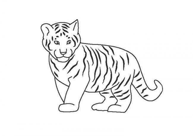Hổ con đáng yêu