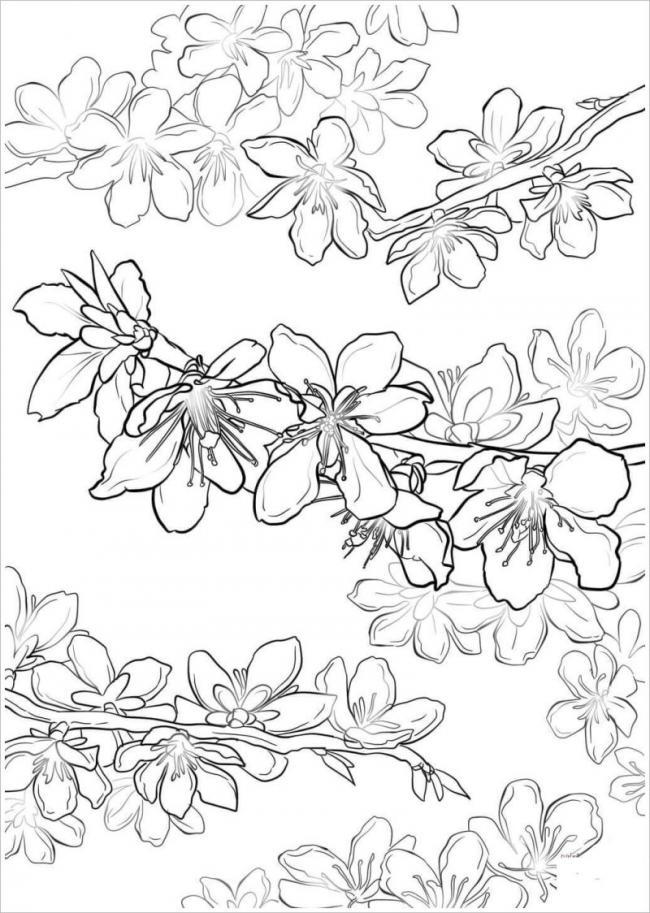 ảnh những cành hoa đào đua nhau khoe sắc trong nắng xuân