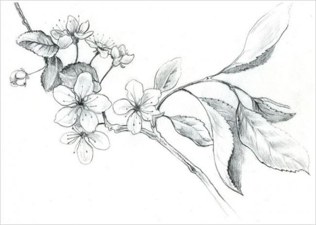 tranh vẽ màu chì hình cây hoa đào