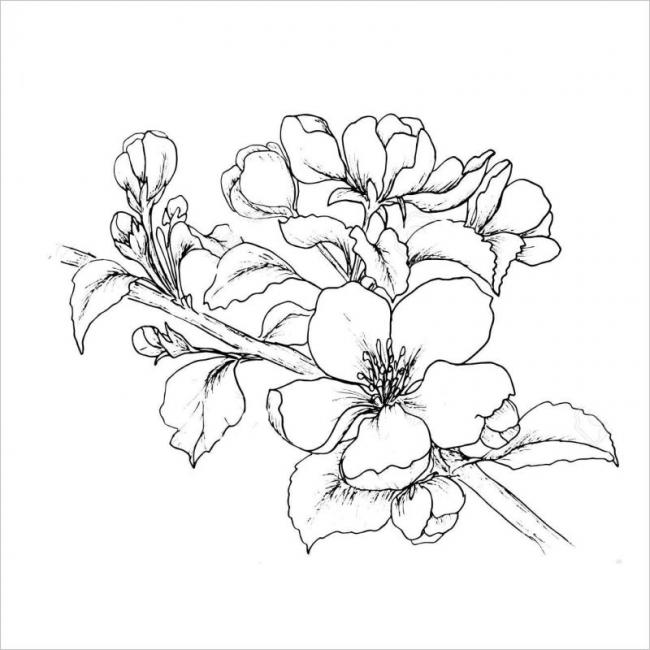ảnh hoa anh đào nở bông xinh đẹp mỗi dịp xuân về