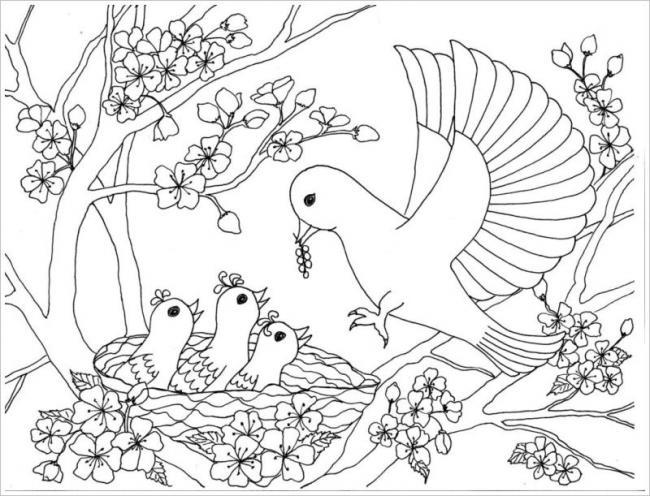 hình ảnh những chú chim làm tổ trên cây hoa đào