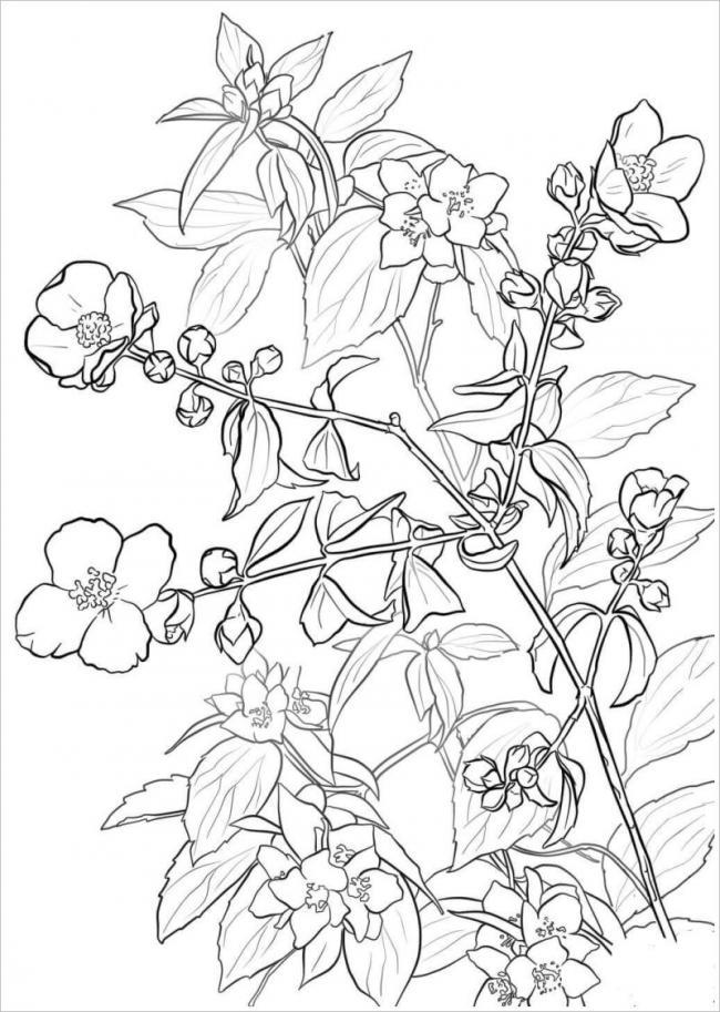 Hình ảnh cây hoa đào với những nụ và trồi lá non