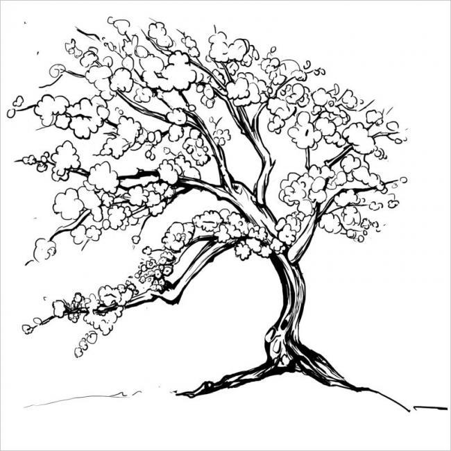 tranh tô màu gốc đào đã được trồng lâu năm